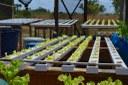 DIA MUNDIAL DA ÁGUA - Projetos nos campi agrícolas do IFRR fazem uso sustentável e reúso da água